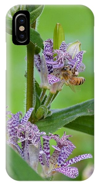 Toad Lily And Hover Fly IPhone Case