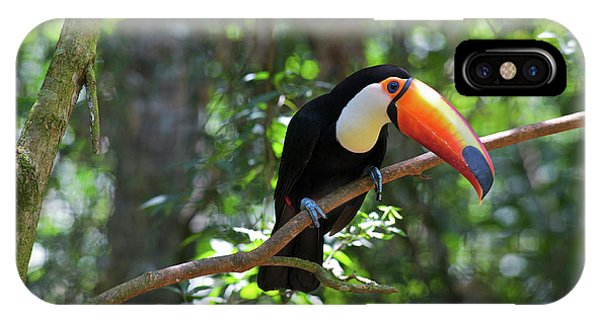 Toco Toucan (ramphastos Toco IPhone Case