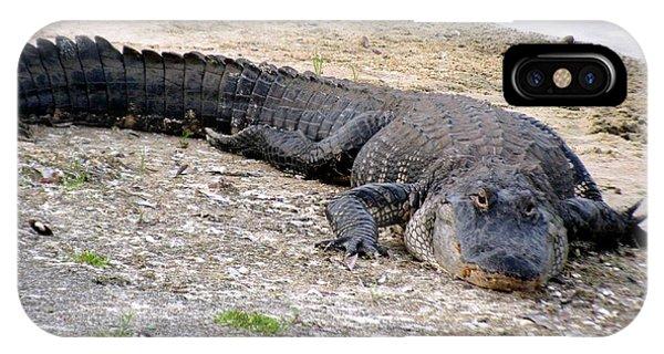 Too Full. American Alligator IPhone Case
