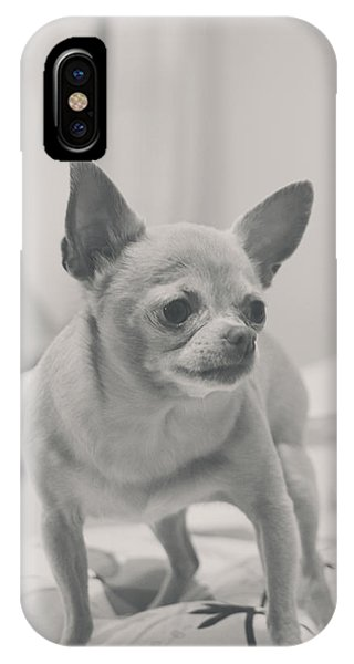 Chihuahua iPhone Case - Tough Girl by Laurie Search
