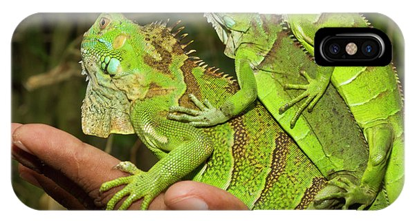 Belize iPhone Case - Tourist With Juvenile Green Iguanas by William Sutton