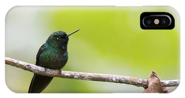 Tourmaline Sunangel Hummingbird IPhone Case
