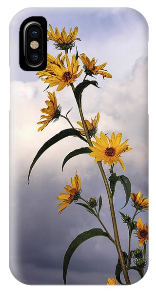 Towering Sunflowers IPhone Case
