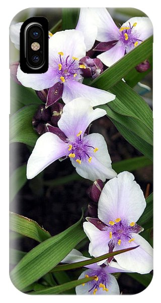 Tradescantia iPhone Case - Tradescantia 'bilberry Ice' by Ian Gowland/science Photo Library