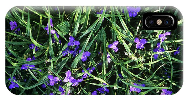 Tradescantia iPhone Case - Tradescantia Flowers by A C Seinet/science Photo Library