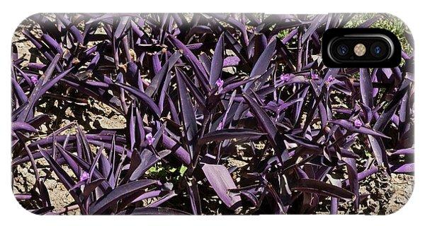 Tradescantia iPhone Case - Tradescantia Pallida 'purpurea' by Brian Gadsby/science Photo Library