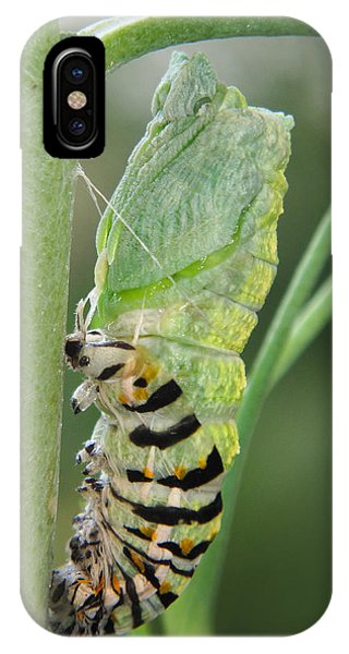 Chrysalis iPhone Case - Transformation by David and Carol Kelly