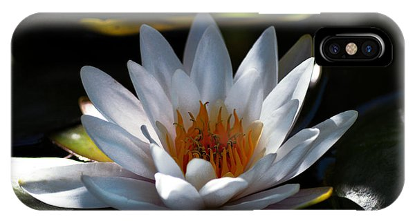 Lillie iPhone Case - Translucent Water Lilly by Daniel Hagerman