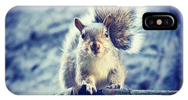 Style iPhone Case - Brooklyn Squirrel by Marcela Martinez