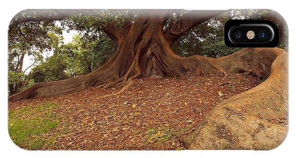 Tree At Royal Botanic Garden IPhone Case