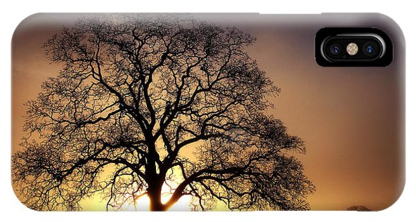 Tree At Sunrise In The Fog IPhone Case