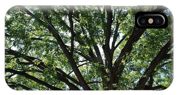 Tree Canopy Sunburst IPhone Case