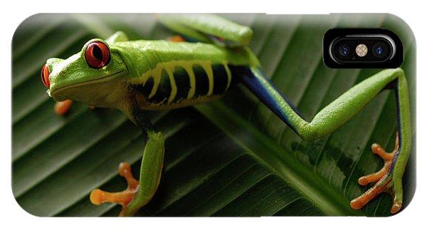 Tree Frog 16 IPhone Case