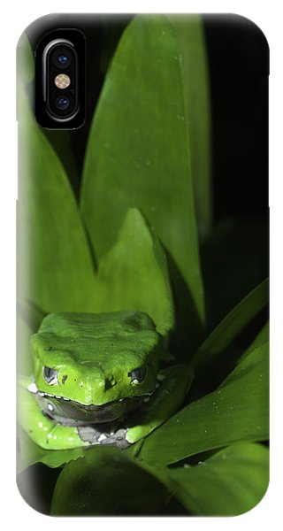 Tree Frog In The Zoo IPhone Case
