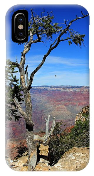 IPhone Case featuring the photograph Tree Grand Canyon by Michael Hope