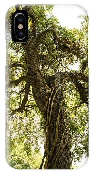 Tree Scape IPhone Case