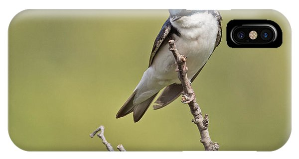 Tree Swallow Phone Case by Brian Magnier