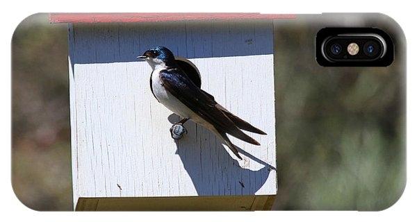 Tree Swallow Home IPhone Case