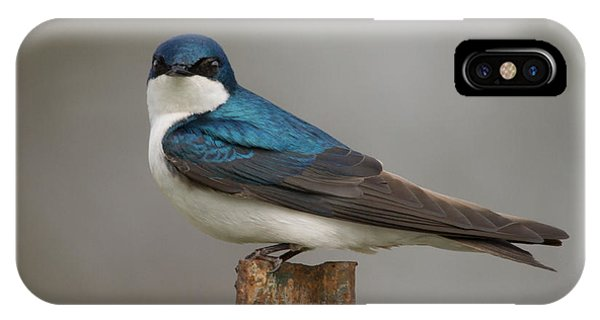 Tree Swallow In Mating Colors Phone Case by Doug Underwood