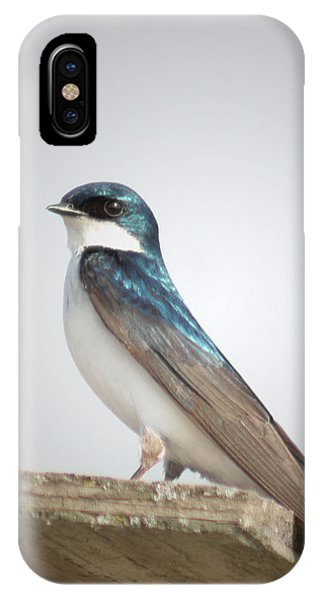 Tree Swallow Portrait IPhone Case