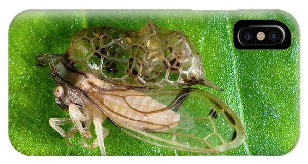 Treehopper Phone Case by Philippe Psaila/science Photo Library