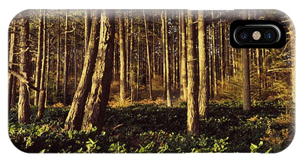 Whidbey iPhone Case - Trees And Salals In A Forest At Sunset by Panoramic Images