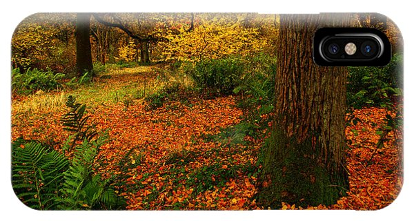 Trees In Autumn Woodland IPhone Case