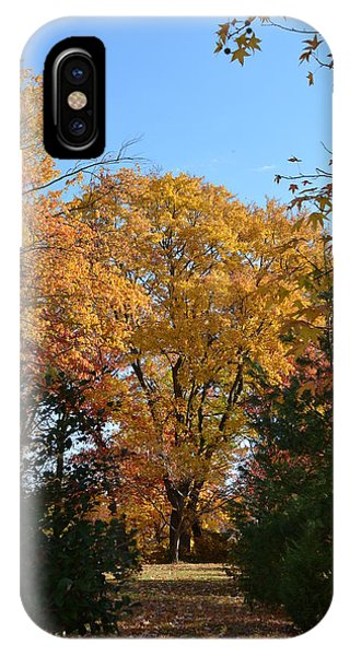 Trees In Fall IPhone Case