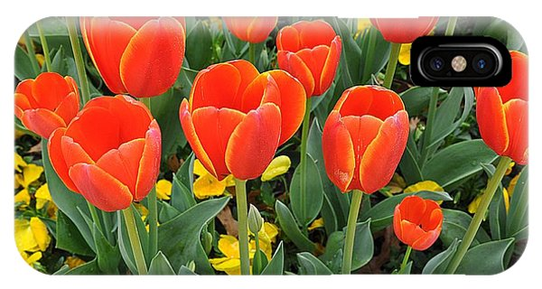 Trendy Tulips  IPhone Case