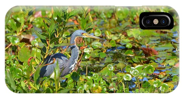 Tri Colored Heron 2 IPhone Case
