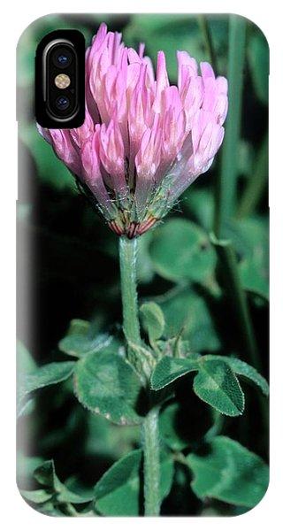 Trifolium Pratense Subsp. Semi Purpureum Phone Case by Bruno Petriglia/science Photo Library