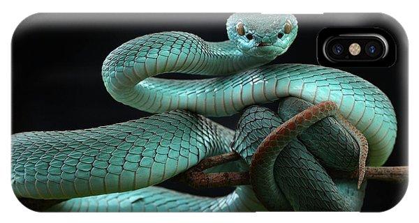 Viper iPhone Case - Trimeresurus Insularis [blue] by Wel Nofri