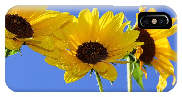 Trio In The Sun - Yellow Daisies By Diana Sainz IPhone Case