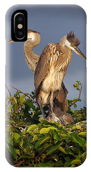 Trio Of Blue Heron Chicks IPhone Case