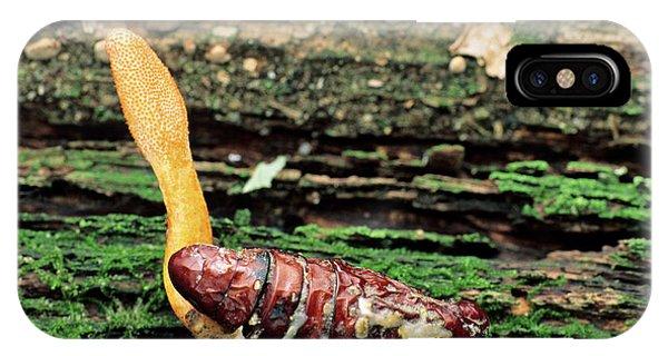 Trooping Cordyceps Fungus Phone Case by Matt Meadows/science Photo Library