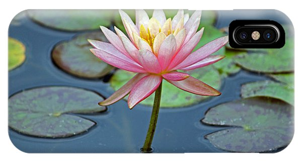 Tropical Pink Lily IPhone Case