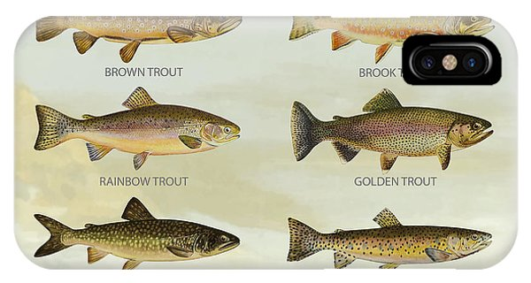 Trout iPhone Case - Trout Species by Aged Pixel