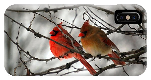 Missouri iPhone Case - True Love Cardinal by Peggy Franz