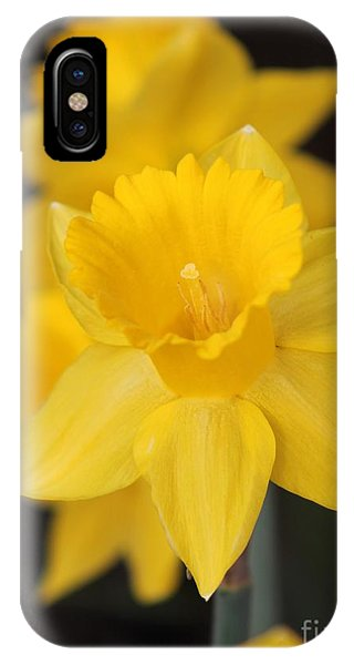 Trumpet Daffodil Named Exception IPhone Case