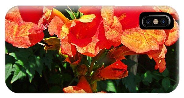 Trumpet Flower Orange Quartet IPhone Case