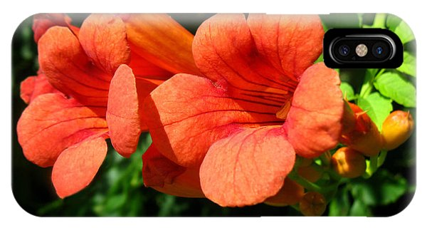 Wild Trumpet Vine IPhone Case