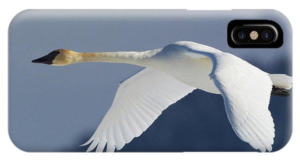 Trumpeter Swan, Winter Flight Phone Case by Ken Archer
