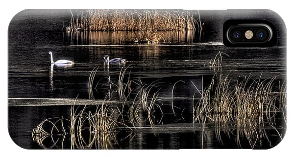 Trumpeter Swans A Swimming IPhone Case