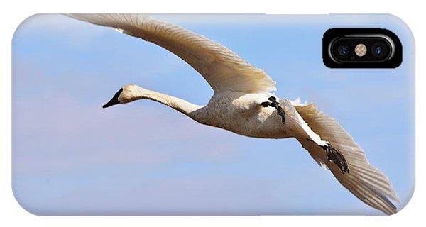 Teal Swan iPhone Case - Trumpter Swan by Kevin Pugh