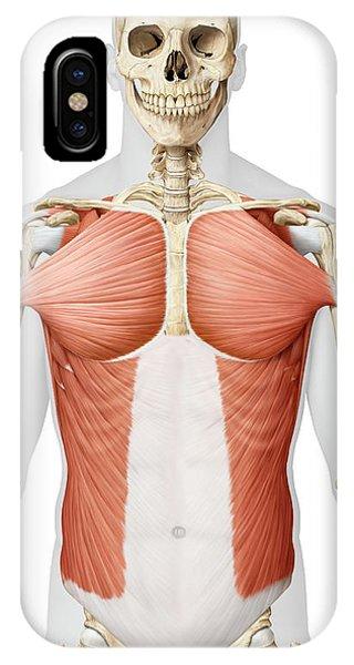 Pectoral Muscle iPhone Cases | Fine Art America