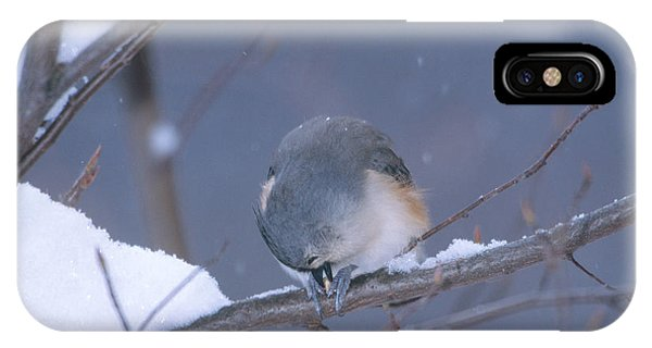 Tufted Titmouse Eating Seeds IPhone Case