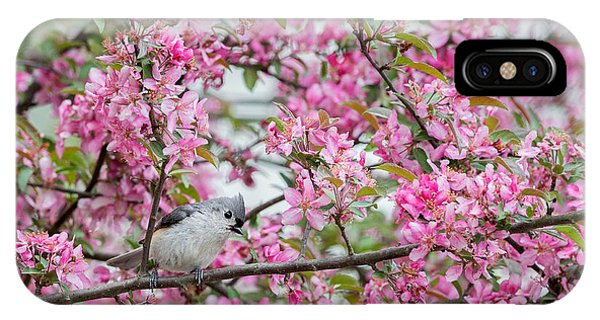 Tufted Titmouse In A Pear Tree IPhone Case