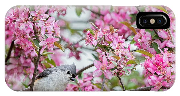Flower song iphone cases page 5 of 30 fine art america flower song iphone case tufted titmouse in a pear tree square by bill wakeley mightylinksfo