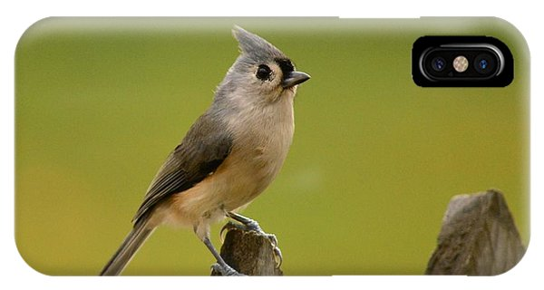 Tufted Titmouse Phone Case by Judy Genovese