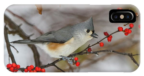 Titmouse iPhone Case - Tufted Titmouse (parus Bicolor by Richard and Susan Day